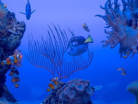 Submerged, Pisces, Coral, Ocean, Reef, Nemo, Disney