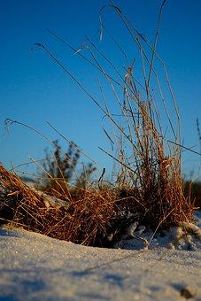 Nature, Sky, Landscape, Dry, Environment, Plant, Earth