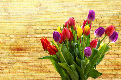 Tulip, Nature, Flower, Easter, Plant