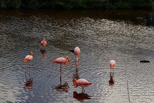 Waters, Lake, Puddle, Bird, Flamingo, Nature
