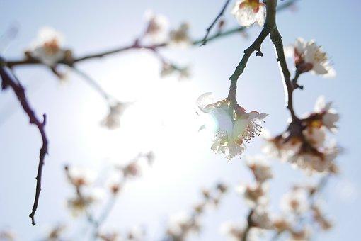 Quarter, Wood, Season, Nature, Flowers