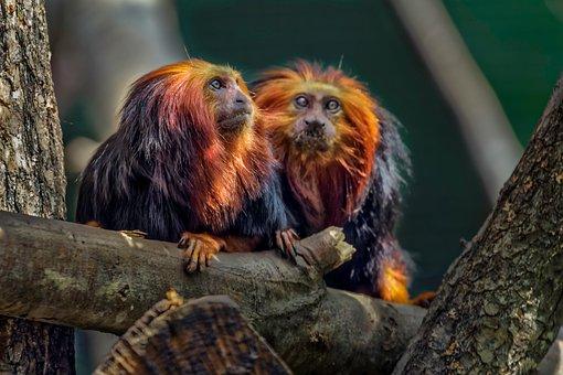 Monkey, No Person, Petit, Cute, Animal, Hair, Zoo