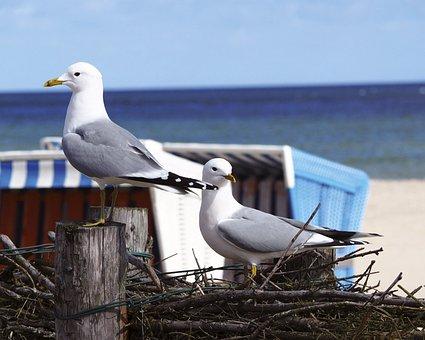 Bird, Animal World, Seagull, Nature, Wing, Sky