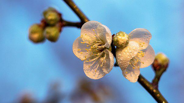 Nature, Branch, Flower, Tree, Flora, Outdoors, Growth