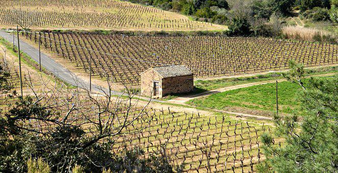 Nature, France, Aude, Hiking, Agro-industry, Vineyard