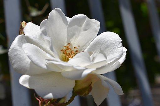 Flower, Nature, Plant, Garden, Leaf