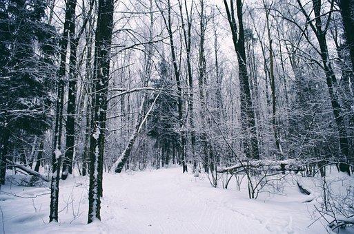Snow, Winter, Wood, Tree, Season, Coldly