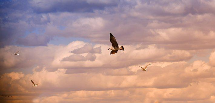 Birds, Seagull, Flight, Sky, Bird Flight, Sea, Seabird