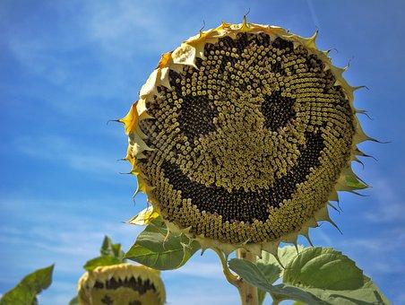 Sun Flower, Laugh, Face, Summer, Flower, Yellow