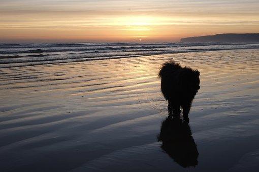 Sunset, Water, Reflection, Dawn, Dusk, Sunrise, Dog