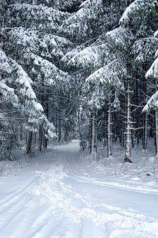 Snow, Winter, Cold, Frost, Frozen, Landscape, Tree