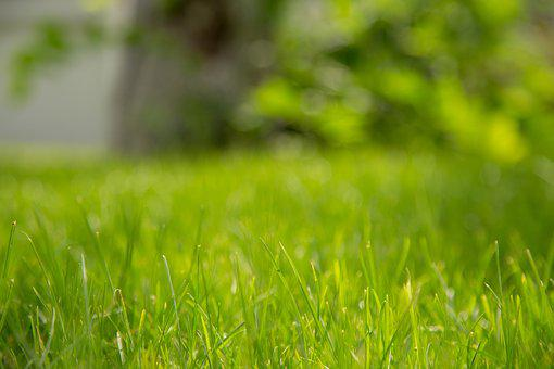 Grass, Green, Background, Nature, Natural, Plant
