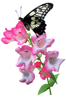Butterfly, Flower, Summer, Plant, Insect