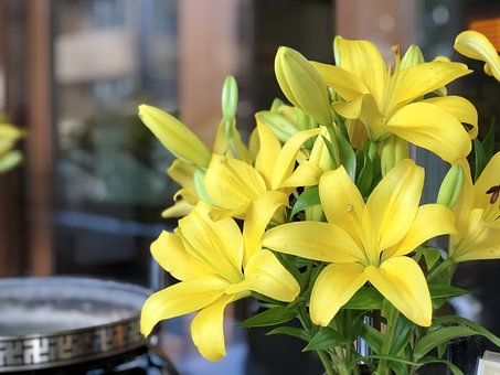 Flower, Nature, Plant, Yellow