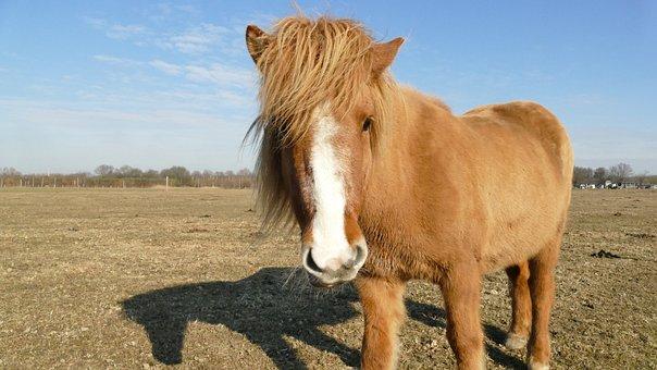 Horse, Coupling, To Watch, Winter, Sun, Paddock
