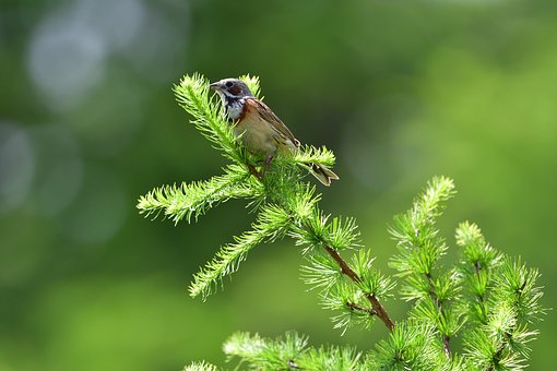 Natural, Leaf, Wood, Any Person Not, Bird, Outdoors