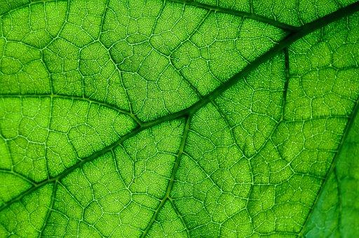 Leaf, Plant, Lived, No One, Nature, Ecology, Closeup