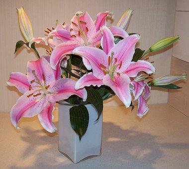 Flower, Lily, Flora, Nature, Beautiful