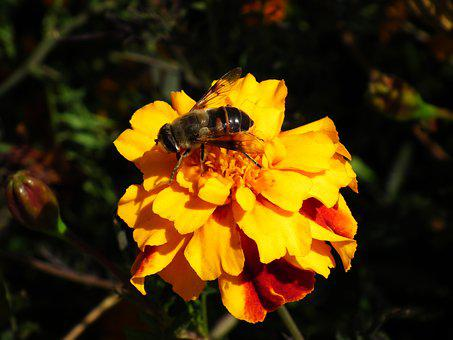 Nature, Flower, Insect, Bee