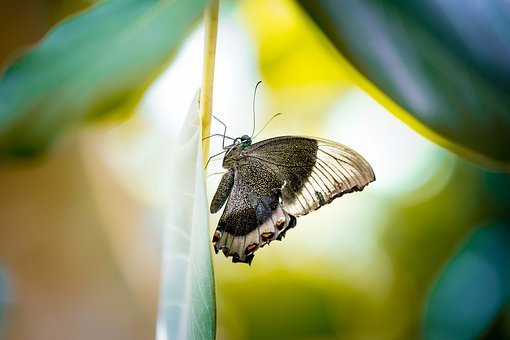 Butterfly, Nature, Insect, Animal, Wing, Outdoors