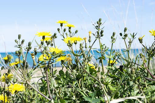 Plant, Nature, Flower, Field, Summer, Spring, Bloom