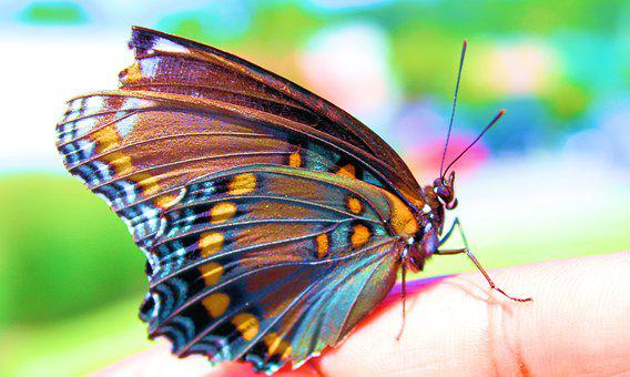Colorful, Butterfly, Insect, Nature, Wing, Summer