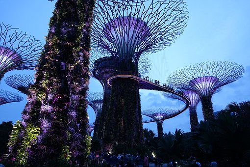 Singapore, Supertree Grove, Nature, Color