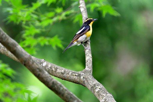 Natural, Bird, Wild Animals, Outdoors, Wild