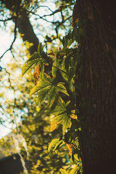 Tree, Leaf, Wood, Nature, Branch, Flora