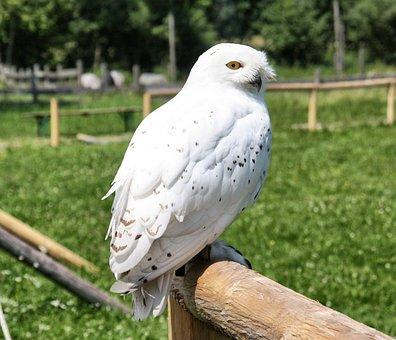 Bird, Nature, Animal World, Animal, Feather