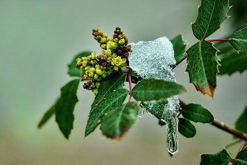 Leaf, Plant, Nature, Flowers, Snow