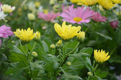 Flower, Nature, Plant, Flower Garden