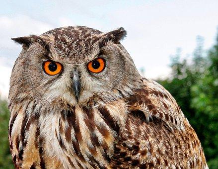 Bird Of Prey, Owl, Animal World, Animal, Prey, Nature