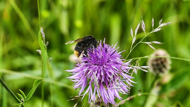 Nature, Summer, Insect, Plant, Flower, Grass, Close