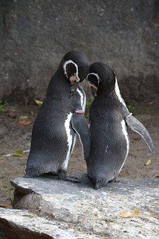 Penguin, Animal World, Bird, Nature