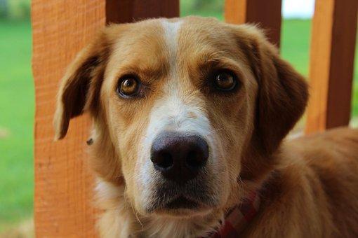 Dog, Pet, Canine, Puppy, Mammal, Animal, Cute, Portrait