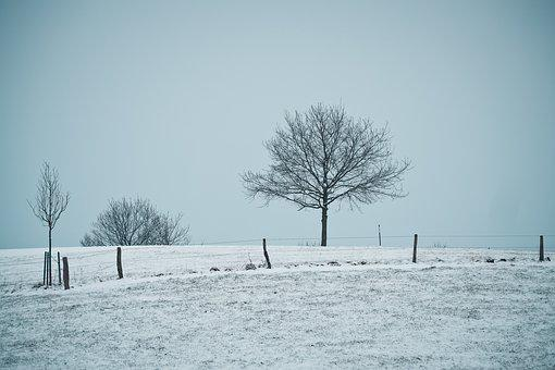 Winter, Snow, Frost, Cold, Nature, Wintry, Winter Cold