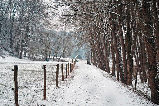 Winter, Snow, Frost, Cold, Wood, Landscape, Weather