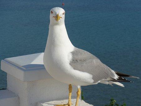 Bird, Seagull, Animal World