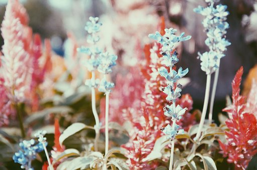 Flower, Color, Nature, Flora, Garden
