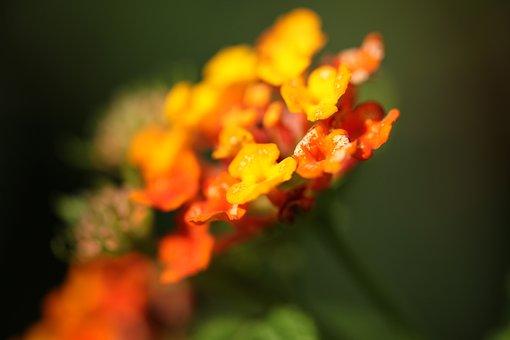 Nature, Flower, Flora, Leaf, Outdoors