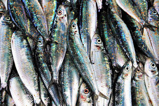 Fish Market, Glow, Gray, Dead, Seafood