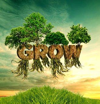 Nature, Grass, Tree, Summer, Landscape, Environment