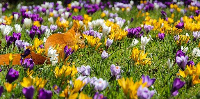 Nature, Flowers, Crocus, Animal