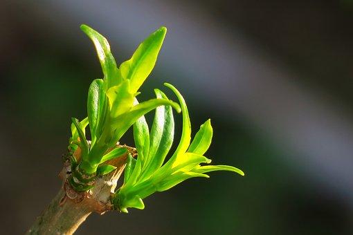 Nature, Leaf, Plant, Kinds Of Food