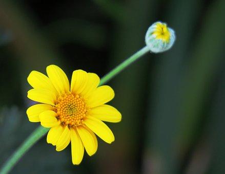 Nature, Flower, Plant, Summer, Petal, Outdoor, Light