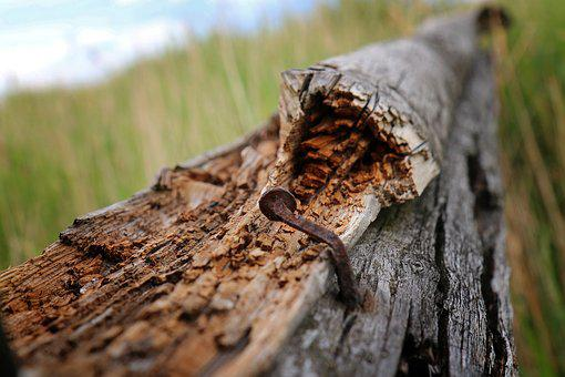 Nail, Stainless, Old, Nature, Wood