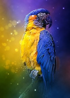 Parrot, Colorful, Bird, Feathered