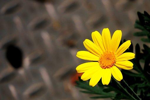 Nature, Flower, Plant, Orange