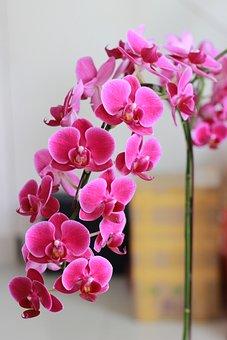Rolling, Purple Flowers, Purple Orchid